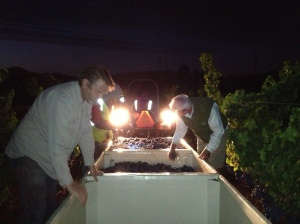 Grenache Harvest and Syrah Soak 017