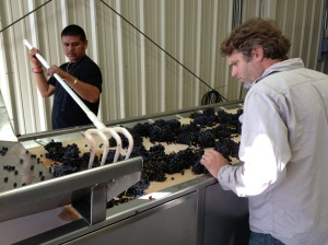 Grenache Harvest and Syrah Soak 020