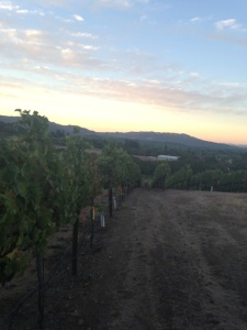 Kick Syrah Harvest 1