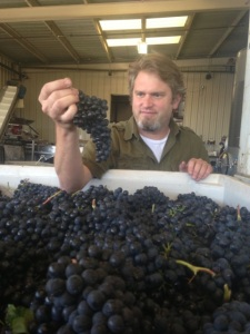 Kick Syrah Harvest6